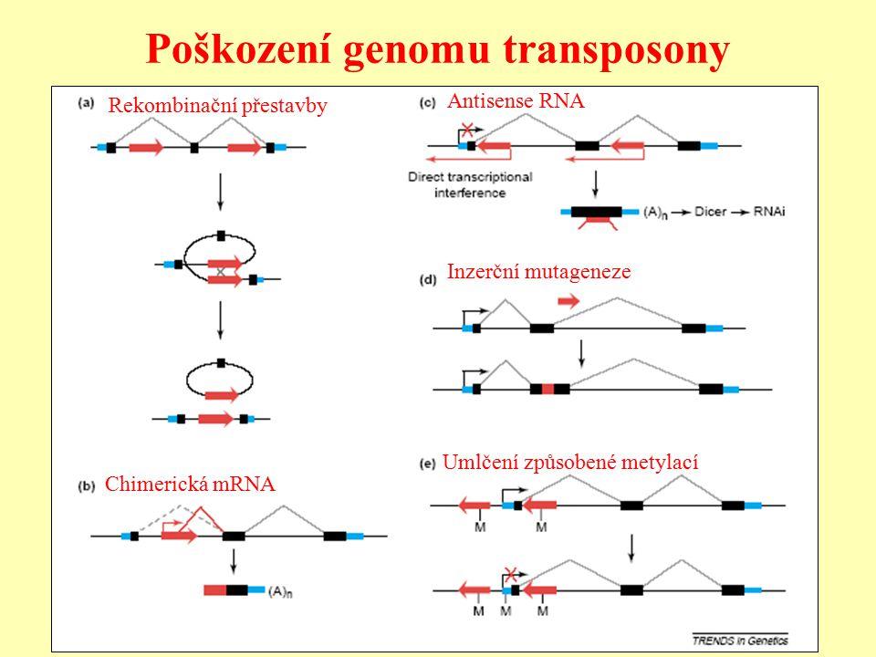 Poškození genomu transposony Inzerční mutageneze Chimerická mRNA Antisense RNA Rekombinační přestavby Umlčení způsobené metylací
