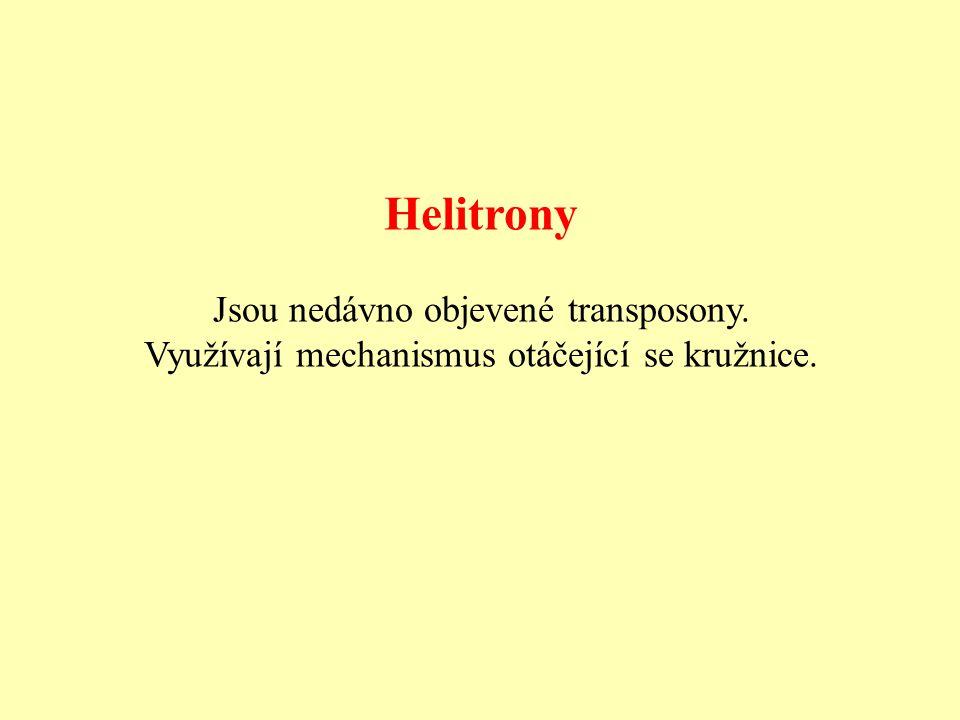 Helitrony Jsou nedávno objevené transposony. Využívají mechanismus otáčející se kružnice.
