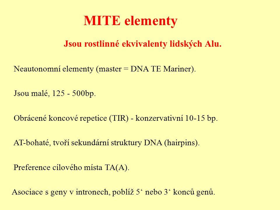 Jsou rostlinné ekvivalenty lidských Alu.Neautonomní elementy (master = DNA TE Mariner).