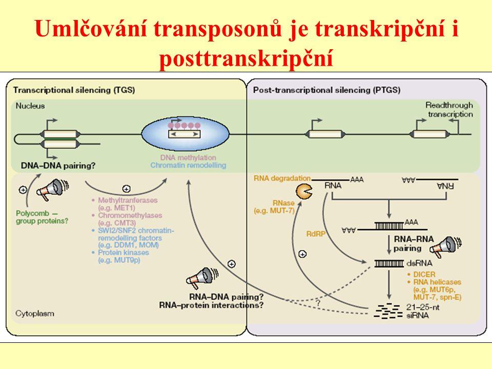 Umlčování transposonů je transkripční i posttranskripční
