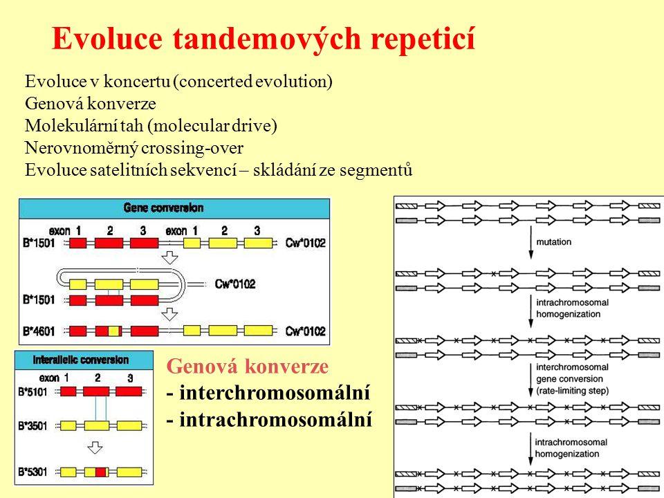 Evoluce tandemových repeticí Evoluce v koncertu (concerted evolution) Genová konverze Molekulární tah (molecular drive) Nerovnoměrný crossing-over Evoluce satelitních sekvencí – skládání ze segmentů Genová konverze - interchromosomální - intrachromosomální