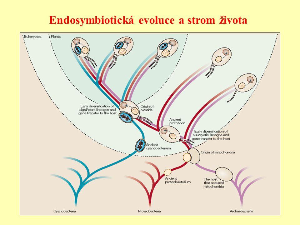 Endosymbiotická evoluce a strom života