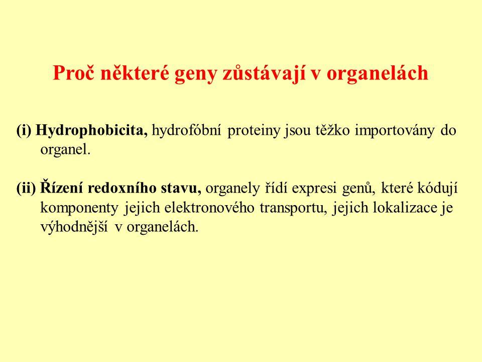 Proč některé geny zůstávají v organelách (i) Hydrophobicita, hydrofóbní proteiny jsou těžko importovány do organel.