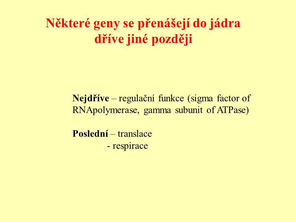 Nejdříve – regulační funkce (sigma factor of RNApolymerase, gamma subunit of ATPase) Poslední – translace - respirace Některé geny se přenášejí do jádra dříve jiné později