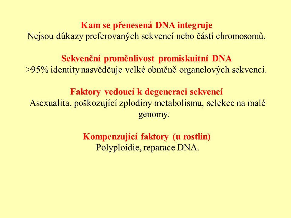 Kam se přenesená DNA integruje Nejsou důkazy preferovaných sekvencí nebo částí chromosomů.