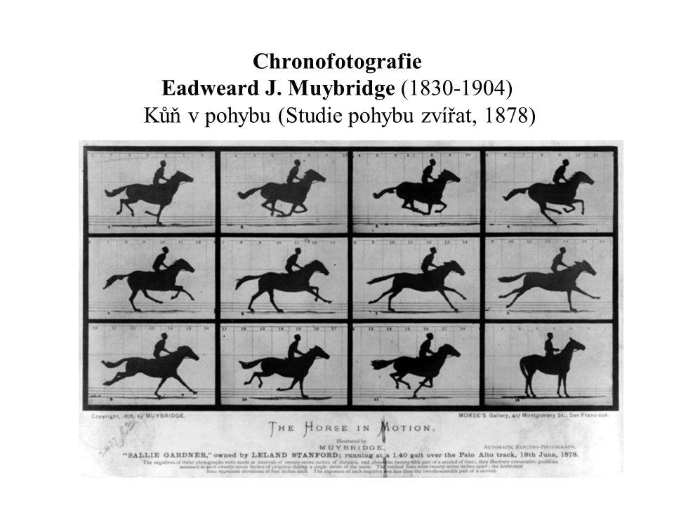 Chronofotografie Eadweard J. Muybridge (1830-1904) Kůň v pohybu (Studie pohybu zvířat, 1878)