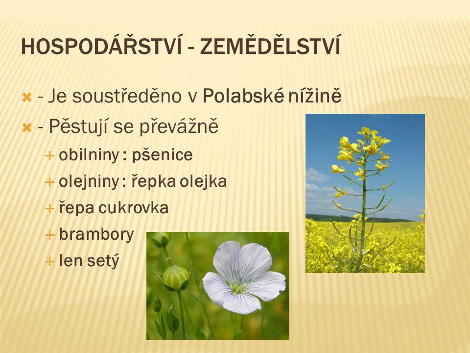 HOSPODÁŘSTVÍ - ZEMĚDĚLSTVÍ  - Je soustředěno v Polabské nížině  - Pěstují se převážně  obilniny : pšenice  olejniny : řepka olejka  řepa cukrovka
