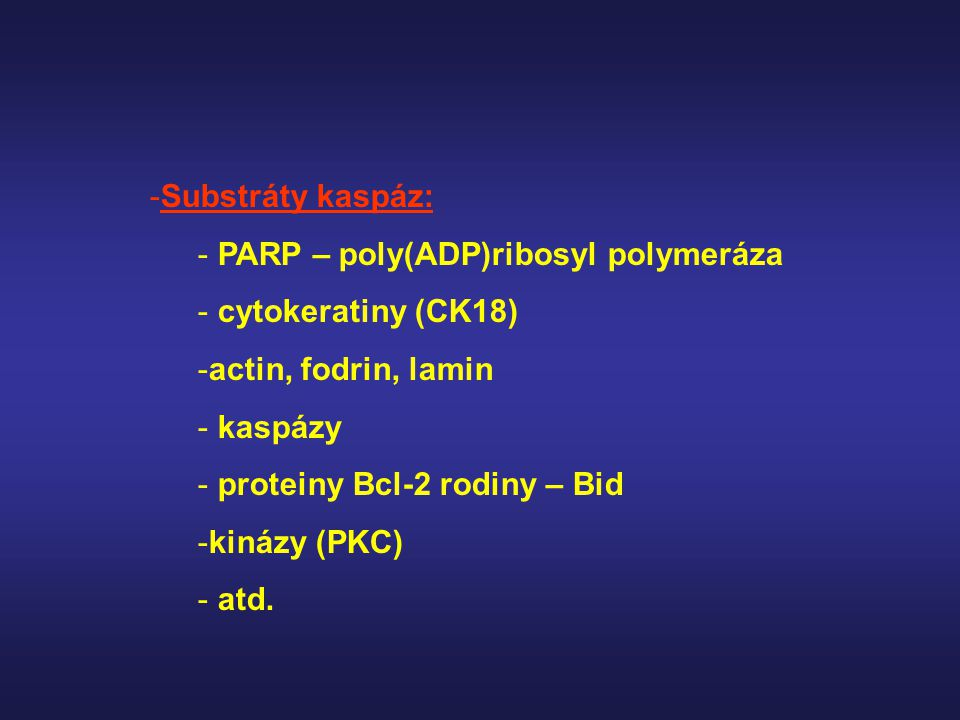 -Substráty kaspáz: - PARP – poly(ADP)ribosyl polymeráza - cytokeratiny (CK18) -actin, fodrin, lamin - kaspázy - proteiny Bcl-2 rodiny – Bid -kinázy (P