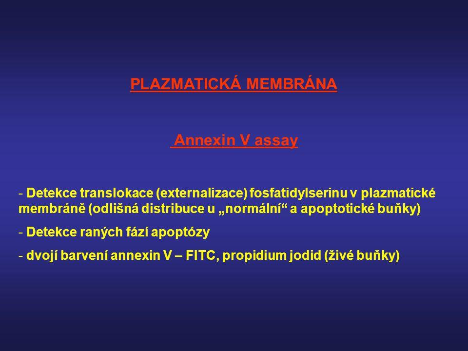 """PLAZMATICKÁ MEMBRÁNA Annexin V assay - Detekce translokace (externalizace) fosfatidylserinu v plazmatické membráně (odlišná distribuce u """"normální"""" a"""