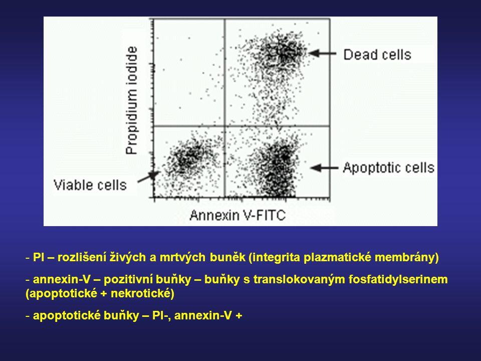 - PI – rozlišení živých a mrtvých buněk (integrita plazmatické membrány) - annexin-V – pozitivní buňky – buňky s translokovaným fosfatidylserinem (apo