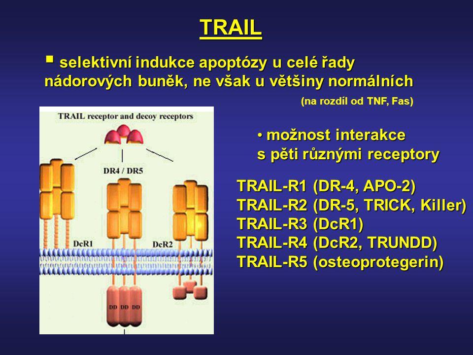 TRAIL  selektivní indukce apoptózy u celé řady nádorových buněk, ne však u většiny normálních TRAIL-R1 (DR-4, APO-2) TRAIL-R2 (DR-5, TRICK, Killer) T