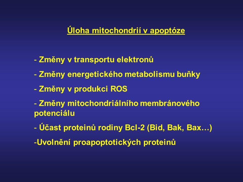Úloha mitochondrií v apoptóze - Změny v transportu elektronů - Změny energetického metabolismu buňky - Změny v produkci ROS - Změny mitochondriálního