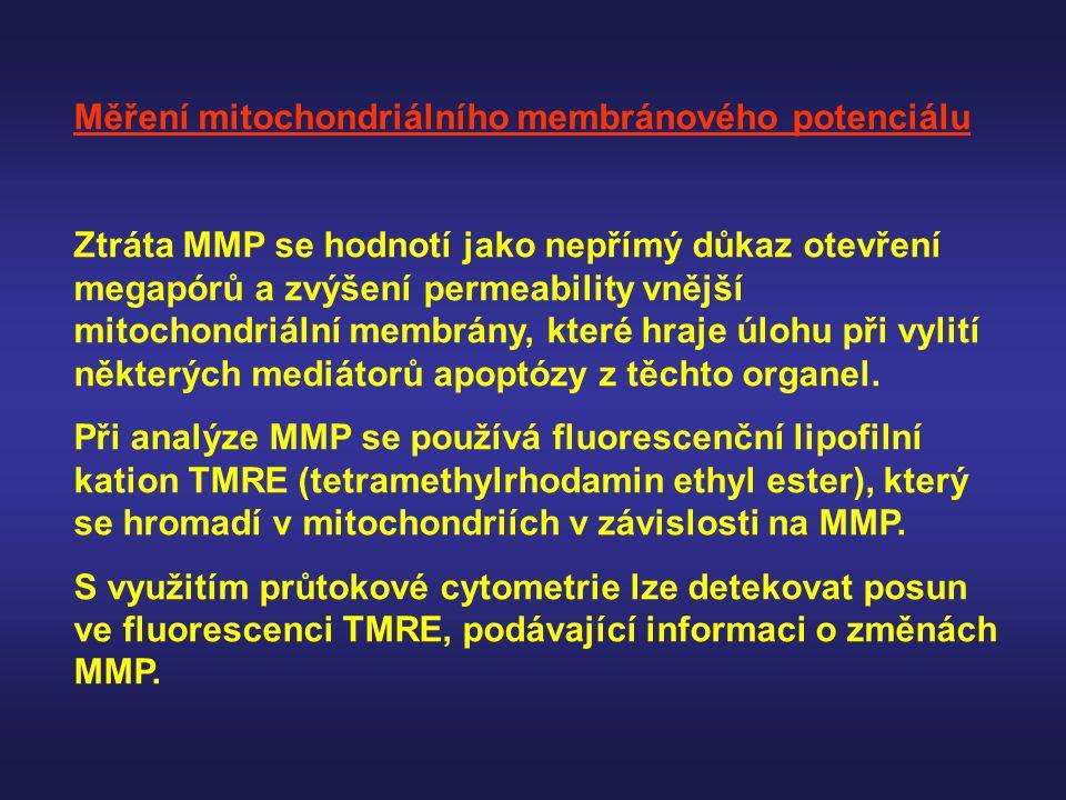 Měření mitochondriálního membránového potenciálu Ztráta MMP se hodnotí jako nepřímý důkaz otevření megapórů a zvýšení permeability vnější mitochondriá