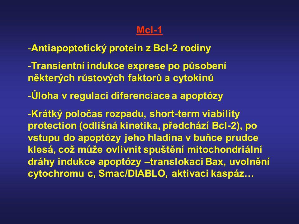 Mcl-1 -Antiapoptotický protein z Bcl-2 rodiny -Transientní indukce exprese po působení některých růstových faktorů a cytokinů -Úloha v regulaci difere