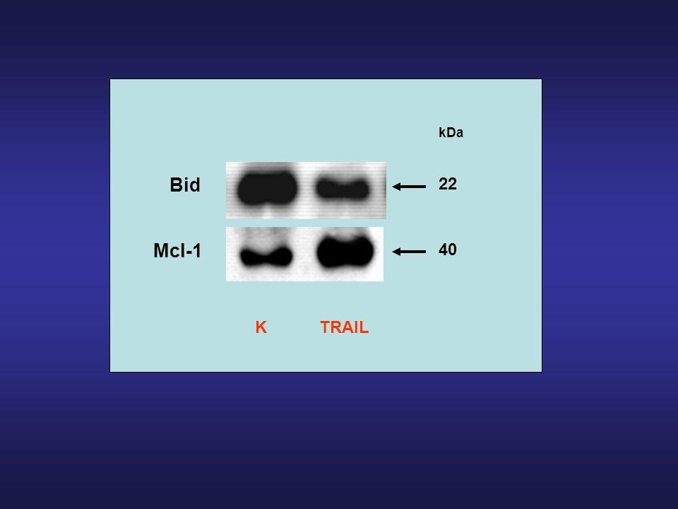 Mcl-1 kDa 40 22 Bid KTRAIL