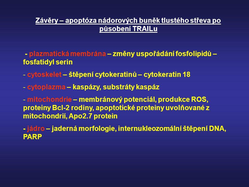 Závěry – apoptóza nádorových buněk tlustého střeva po působení TRAILu - plazmatická membrána – změny uspořádání fosfolipidů – fosfatidyl serin - cytos