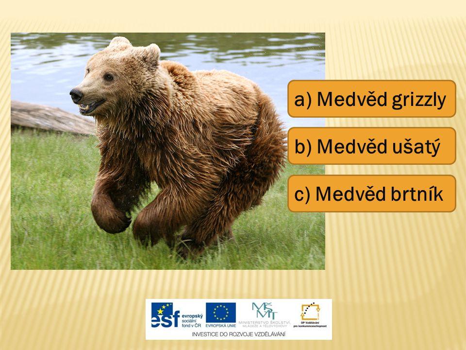 a) Medvěd grizzly c) Medvěd brtník b) Medvěd ušatý