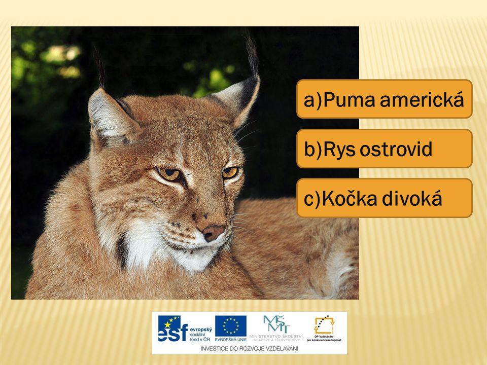 a)Puma americká b)Rys ostrovid c)Kočka divoká
