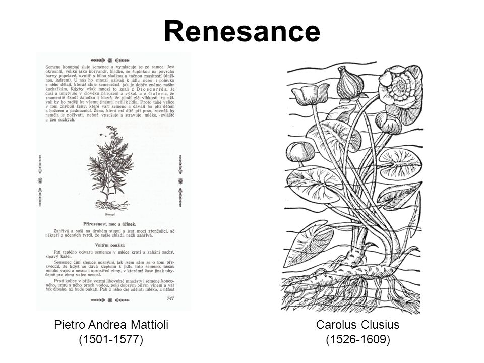 Renesance Pietro Andrea Mattioli (1501-1577) Carolus Clusius (1526-1609)