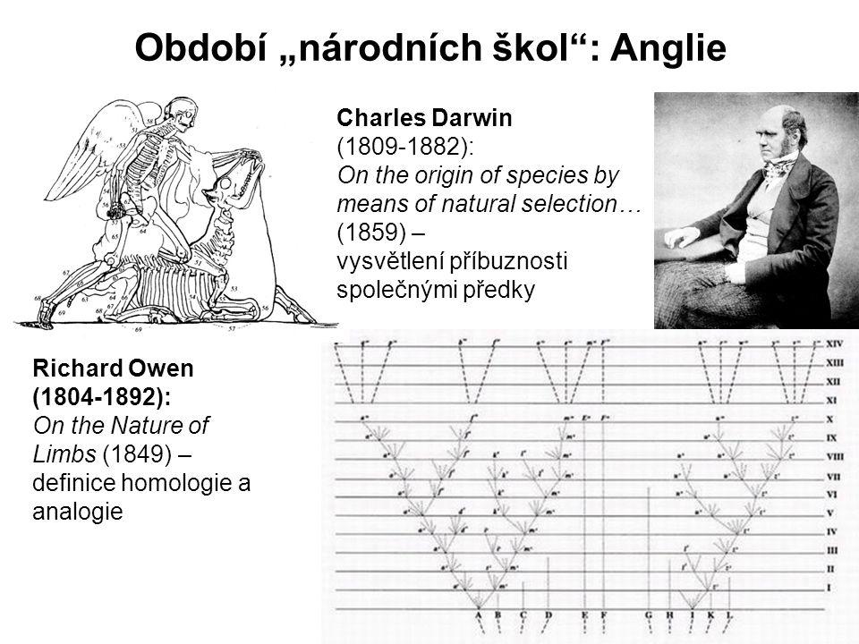 """Období """"národních škol : Anglie Richard Owen (1804-1892): On the Nature of Limbs (1849) – definice homologie a analogie Charles Darwin (1809-1882): On the origin of species by means of natural selection… (1859) – vysvětlení příbuznosti společnými předky"""