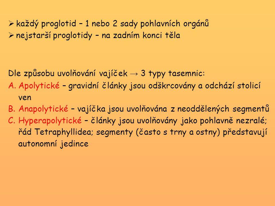 Dle způsobu uvolňování vajíček → 3 typy tasemnic: A.Apolytické – gravidní články jsou odškrcovány a odchází stolicí ven B.Anapolytické – vajíčka jsou