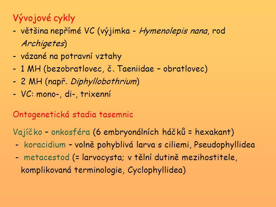 Vývojové cykly -většina nepřímé VC (výjimka - Hymenolepis nana, rod Archigetes) -vázané na potravní vztahy -1 MH (bezobratlovec, č. Taeniidae – obratl
