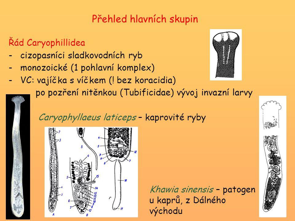 Přehled hlavních skupin Řád Caryophillidea -cizopasníci sladkovodních ryb -monozoické (1 pohlavní komplex) -VC: vajíčka s víčkem (! bez koracidia) po