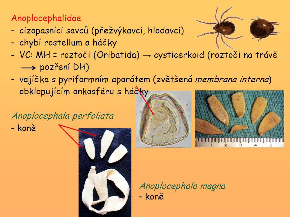 Anoplocephalidae -cizopasníci savců (přežvýkavci, hlodavci) -chybí rostellum a háčky -VC: MH = roztoči (Oribatida) → cysticerkoid (roztoči na trávě po