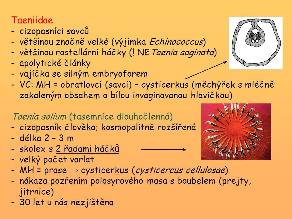 Taeniidae -cizopasníci savců -většinou značně velké (výjimka Echinococcus) -většinou rostellární háčky (! NETaenia saginata) -apolytické články -vajíč