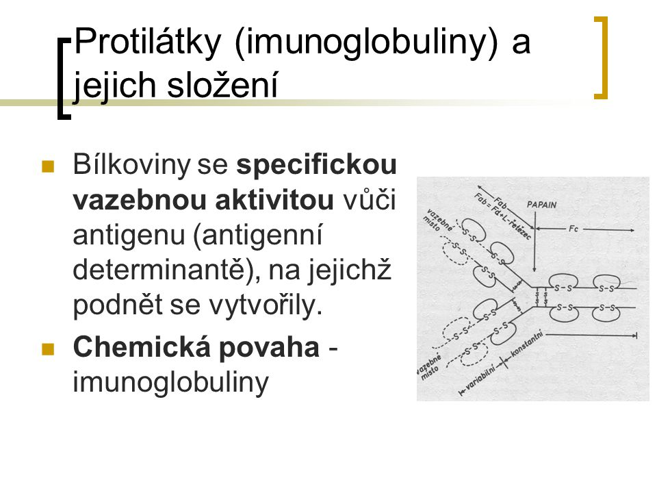 Protilátky (imunoglobuliny) a jejich složení Bílkoviny se specifickou vazebnou aktivitou vůči antigenu (antigenní determinantě), na jejichž podnět se