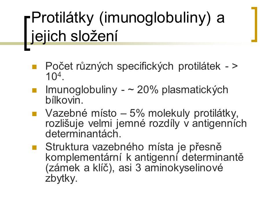 Protilátky (imunoglobuliny) a jejich složení Počet různých specifických protilátek - > 10 4. Imunoglobuliny - ~ 20% plasmatických bílkovin. Vazebné mí