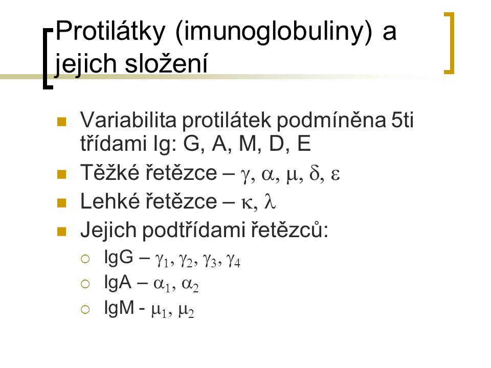 Protilátky (imunoglobuliny) a jejich složení Variabilita protilátek podmíněna 5ti třídami Ig: G, A, M, D, E Těžké řetězce –  Lehké řetězce –  Jejich podtřídami řetězců:  IgG –          IgA –      IgM -    