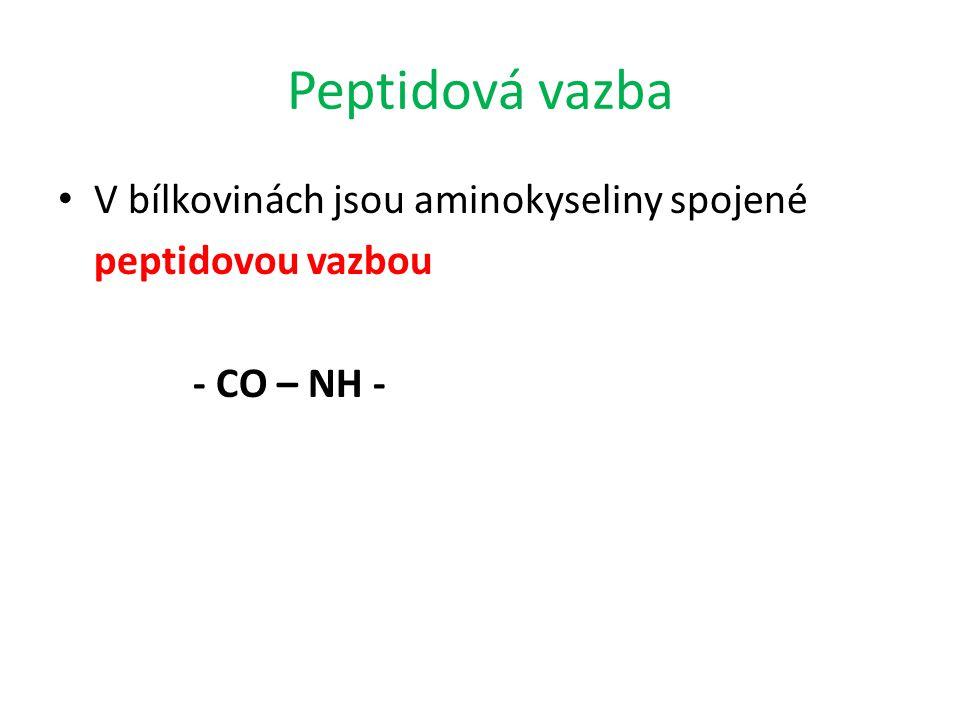 Peptidová vazba V bílkovinách jsou aminokyseliny spojené peptidovou vazbou - CO – NH -