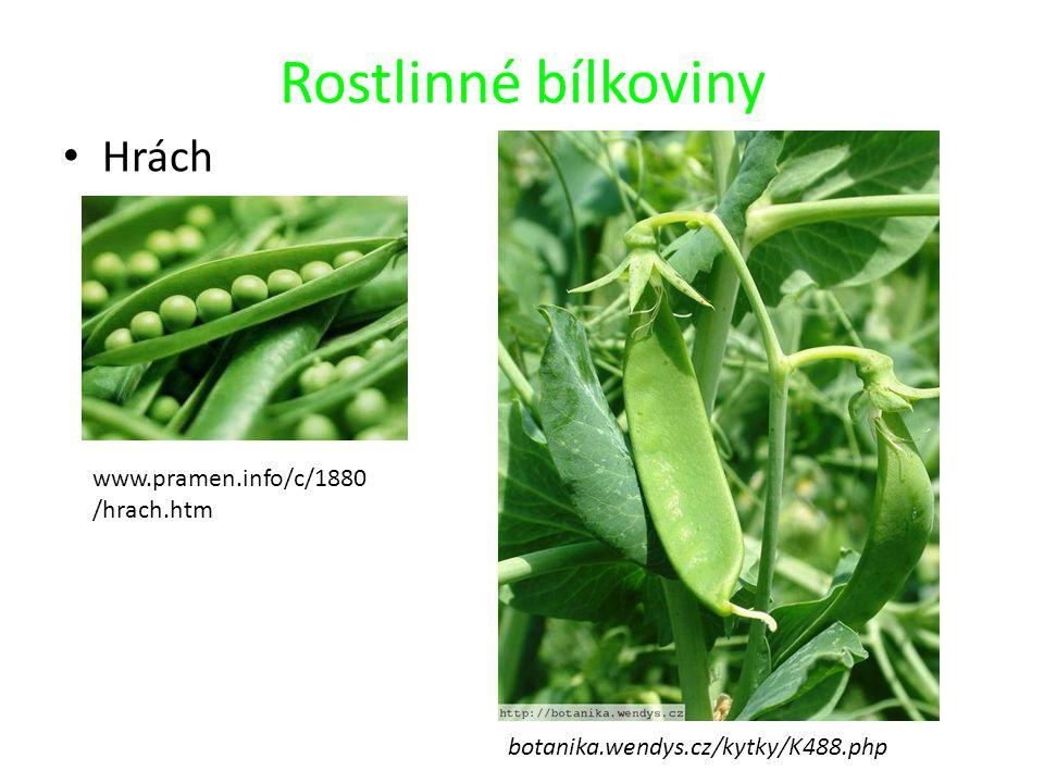 Rostlinné bílkoviny Hrách botanika.wendys.cz/kytky/K488.php www.pramen.info/c/1880 /hrach.htm