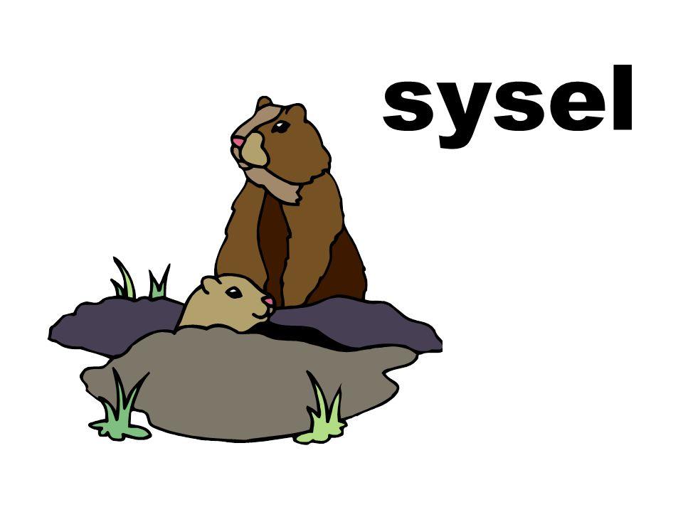 sysel