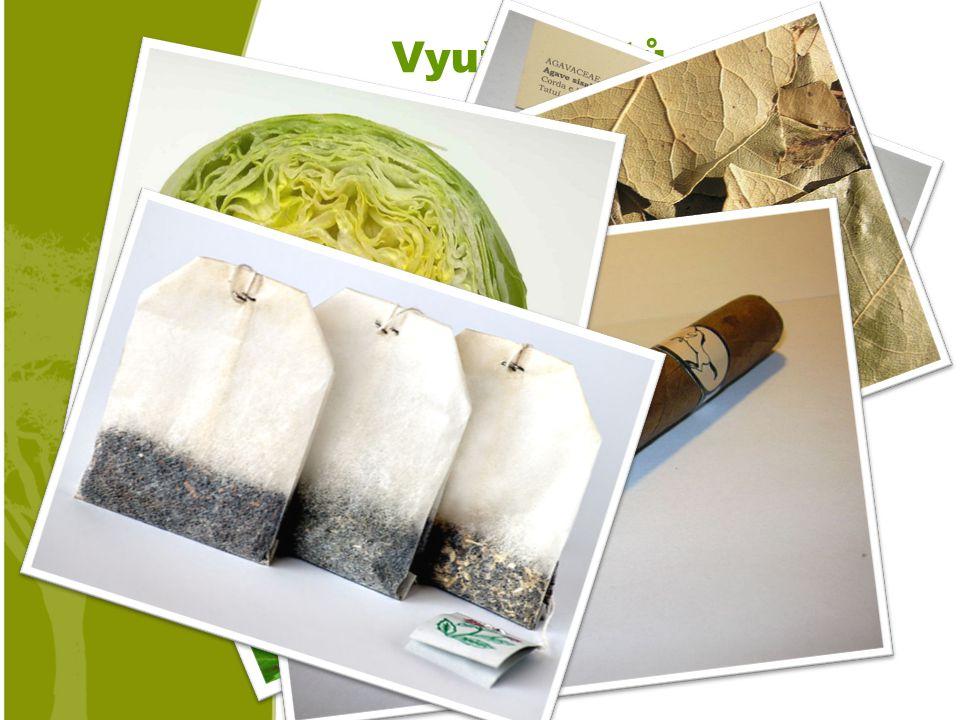 Využití listů o Zelenina (ledový salát) o Čaj o Koření (bobkový list) o Tabák, drogy… o Lano o Léčivé rostliny (bylinky)