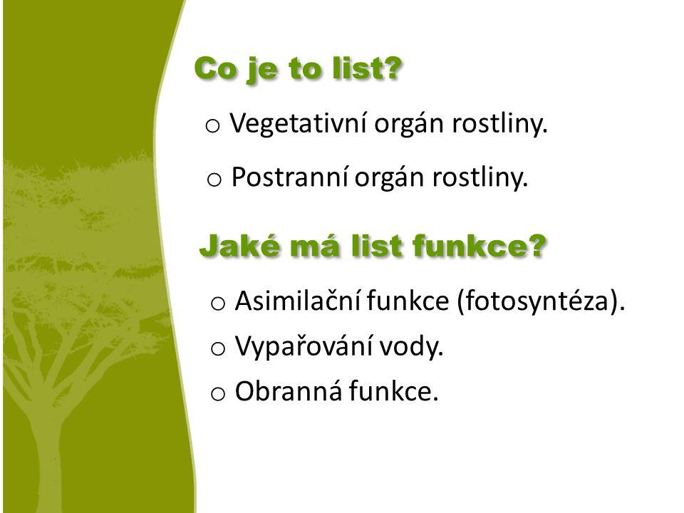 o Vegetativní orgán rostliny.o Postranní orgán rostliny.