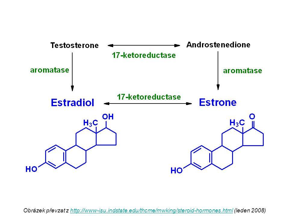 Obrázek převzat z http://www-isu.indstate.edu/thcme/mwking/steroid-hormones.html (leden 2008)http://www-isu.indstate.edu/thcme/mwking/steroid-hormones.html