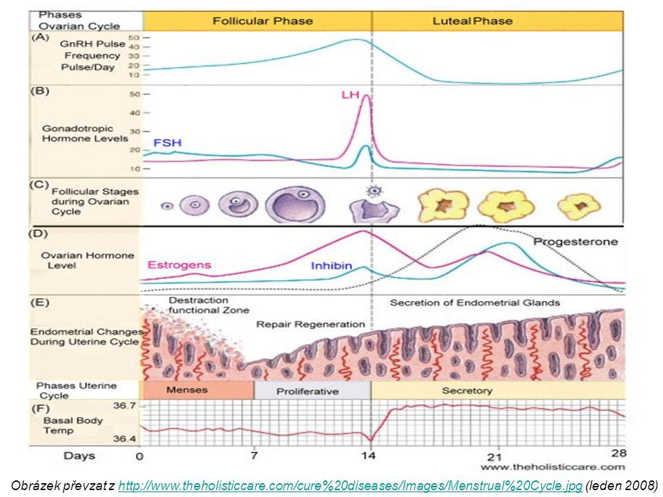 Obrázek převzat z http://www.theholisticcare.com/cure%20diseases/Images/Menstrual%20Cycle.jpg (leden 2008)http://www.theholisticcare.com/cure%20diseas
