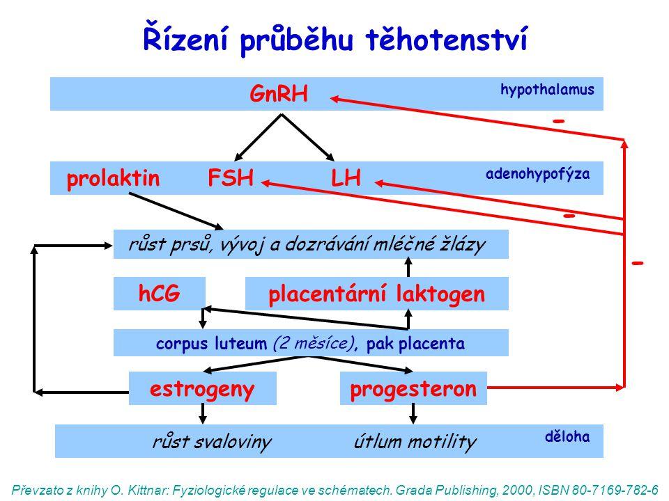 Řízení průběhu těhotenství GnRH hypothalamus prolaktin FSH LH adenohypofýza růst prsů, vývoj a dozrávání mléčné žlázy estrogenyprogesteron růst svaloviny útlum motility děloha hCG Převzato z knihy O.