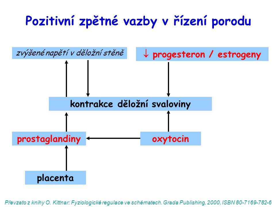 Pozitivní zpětné vazby v řízení porodu prostaglandinyoxytocin zvýšené napětí v děložní stěně Převzato z knihy O.