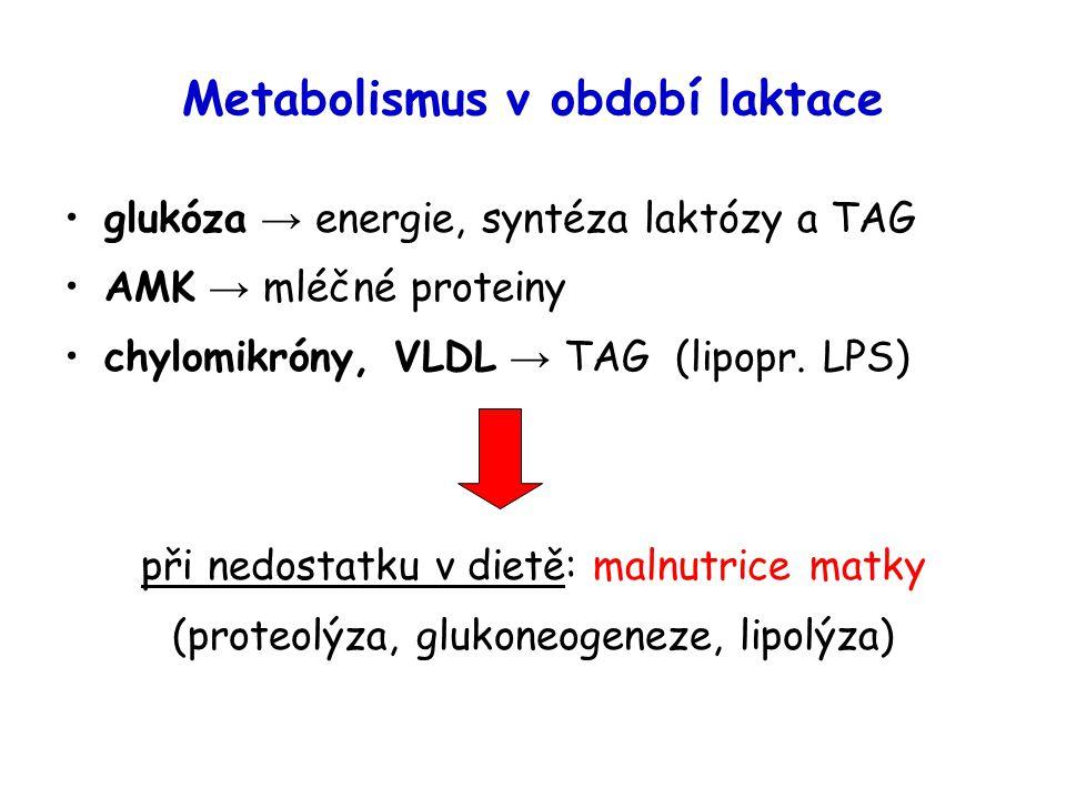 Metabolismus v období laktace glukóza → energie, syntéza laktózy a TAG AMK → mléčné proteiny chylomikróny, VLDL → TAG (lipopr. LPS) při nedostatku v d