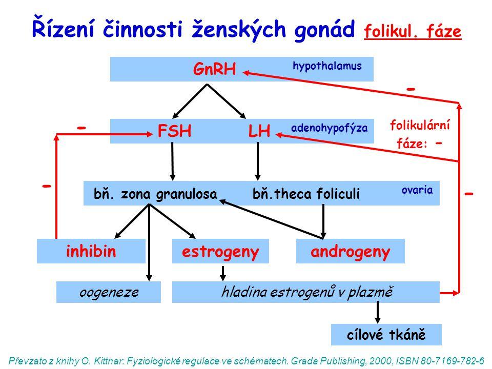 Řízení činnosti ženských gonád folikul. fáze GnRH hypothalamus FSH LH adenohypofýza bň. zona granulosa bň.theca foliculi ovaria oogeneze inhibinandrog
