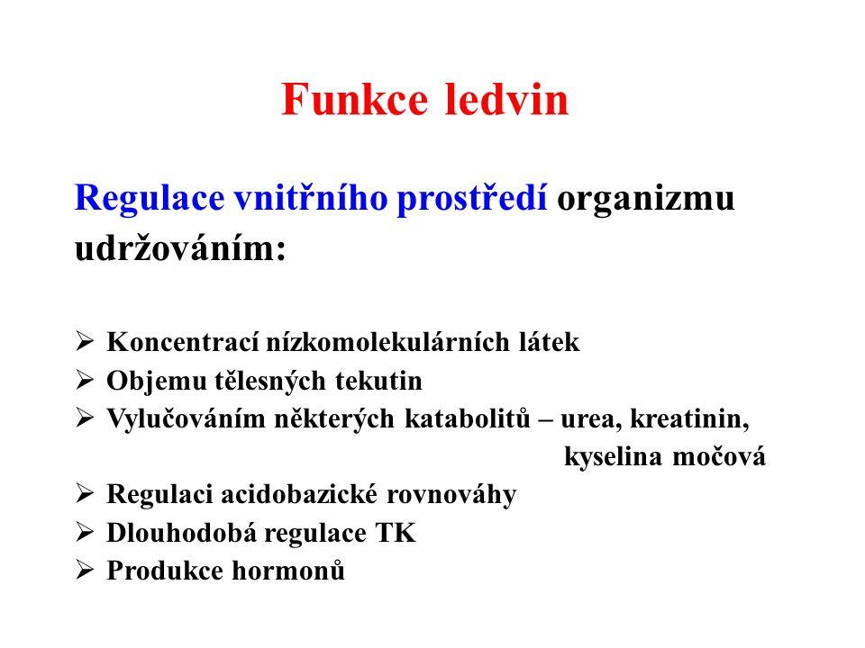 Funkce ledvin Regulace vnitřního prostředí organizmu udržováním:  Koncentrací nízkomolekulárních látek  Objemu tělesných tekutin  Vylučováním někte