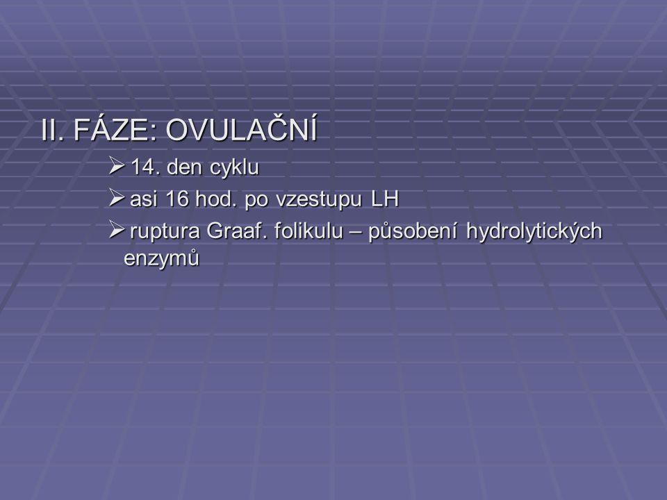 II. FÁZE: OVULAČNÍ  14. den cyklu  asi 16 hod. po vzestupu LH  ruptura Graaf. folikulu – působení hydrolytických enzymů