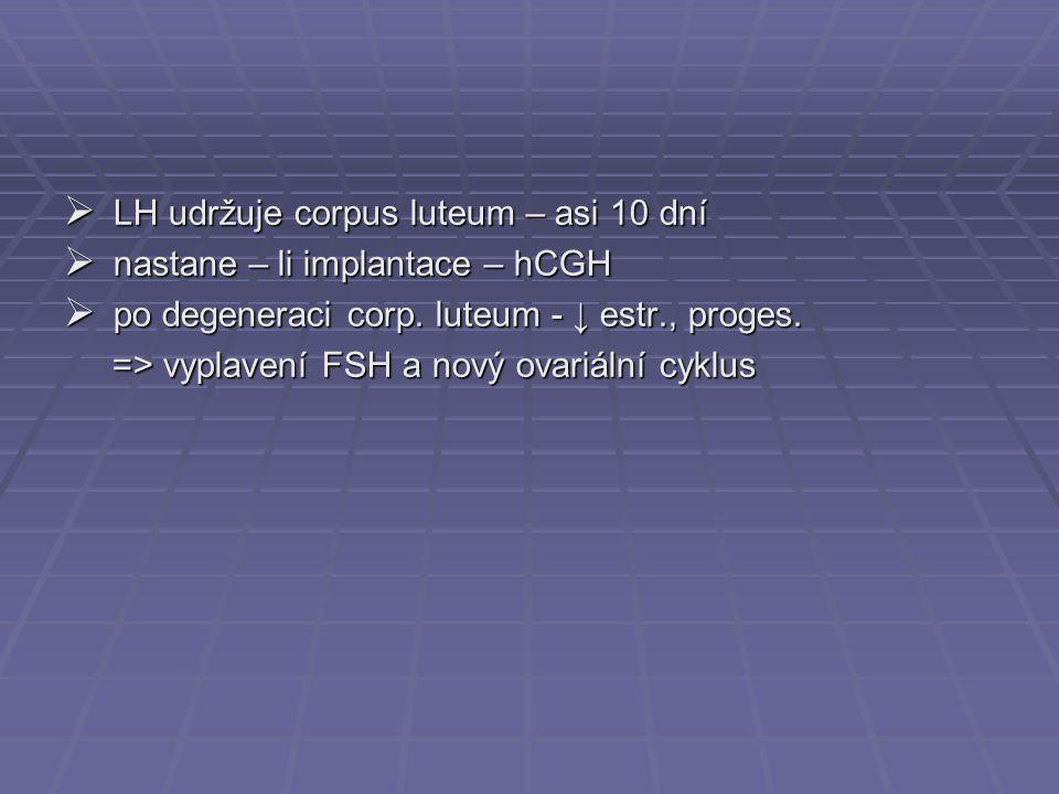  LH udržuje corpus luteum – asi 10 dní  nastane – li implantace – hCGH  po degeneraci corp. luteum - ↓ estr., proges. => vyplavení FSH a nový ovari