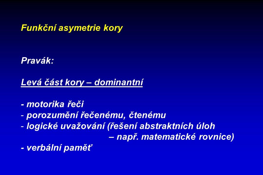 Funkční asymetrie kory Pravák: Levá část kory – dominantní - motorika řeči - porozumění řečenému, čtenému - logické uvažování (řešení abstraktních úlo