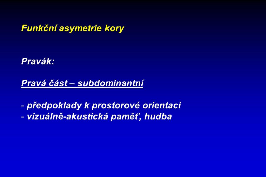 Funkční asymetrie kory Pravák: Pravá část – subdominantní - předpoklady k prostorové orientaci - vizuálně-akustická paměť, hudba