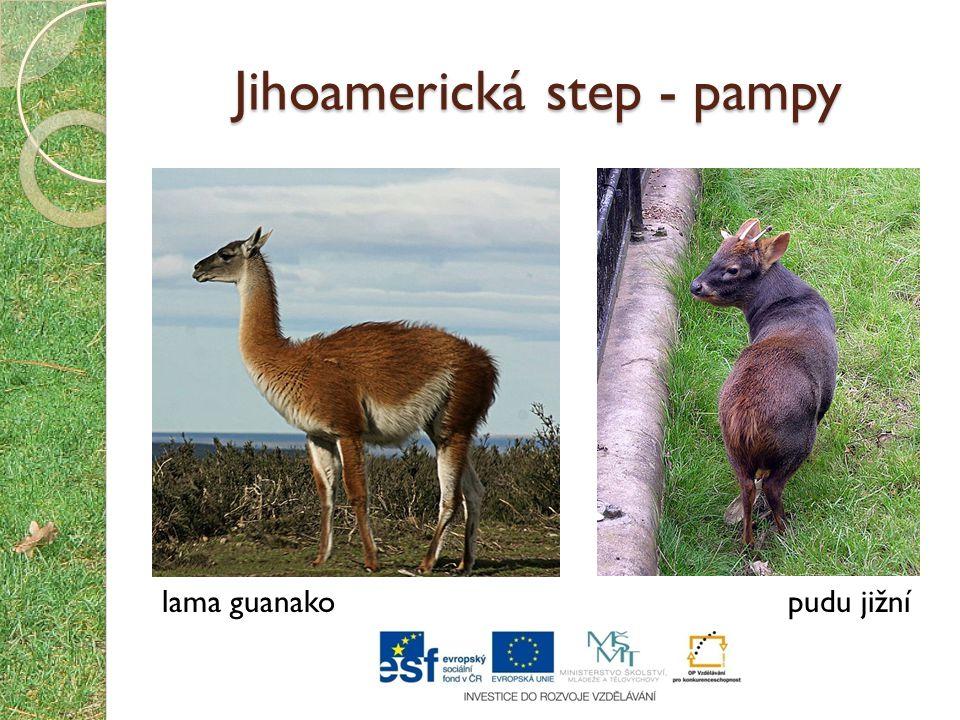Jihoamerická step - pampy lama guanakopudu jižní