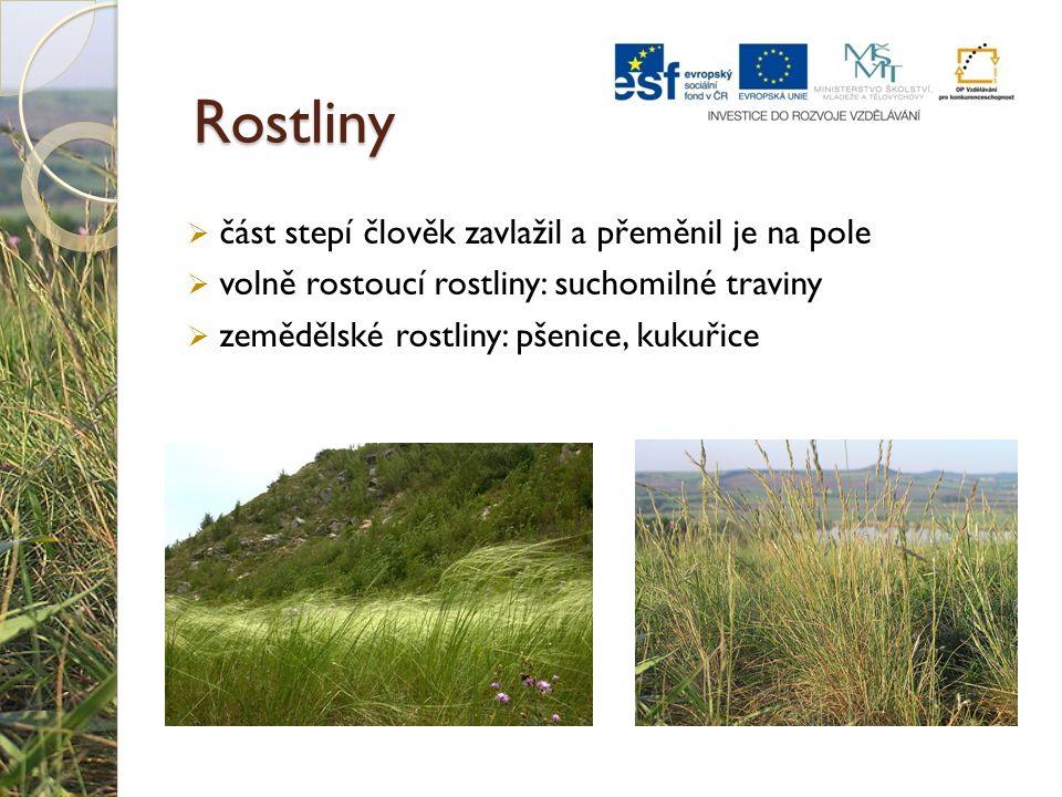 Rostliny  část stepí člověk zavlažil a přeměnil je na pole  volně rostoucí rostliny: suchomilné traviny  zemědělské rostliny: pšenice, kukuřice